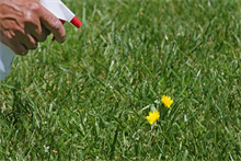 Lawn care expert David Hedges Gower on weedkillers